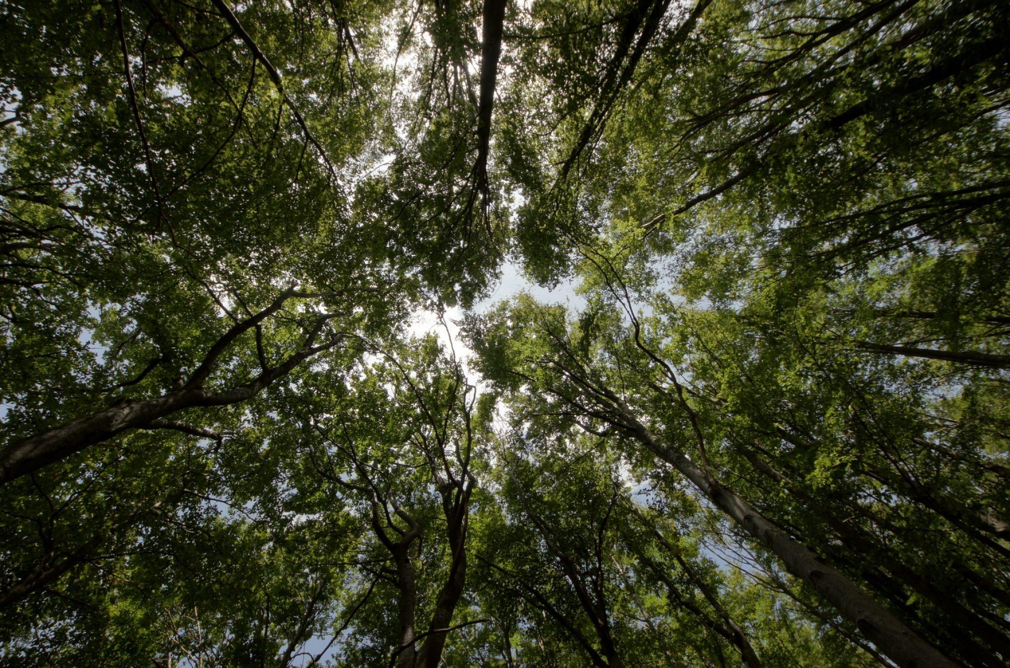 Smartforest